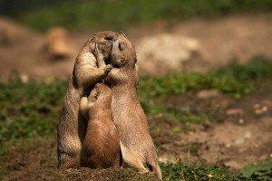 ob_1f6a5d_animal-love-friendship-22-880