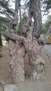 arbres14